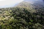Borneo rainforest -- sabah_0842