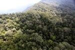 Borneo rainforest -- sabah_0843