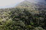 Borneo rainforest -- sabah_0844