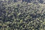 Borneo rainforest -- sabah_0845