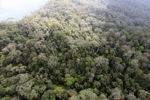 Borneo rainforest -- sabah_0846