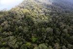 Borneo rainforest -- sabah_0847