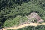 Deforestation in Borneo -- sabah_0848