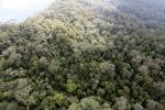 Borneo rainforest -- sabah_0849