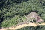 Deforestation in Borneo -- sabah_0850