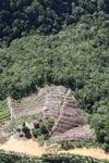 Deforestation in Borneo -- sabah_0852