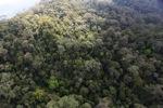 Borneo rainforest -- sabah_0853
