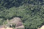 Deforestation in Borneo -- sabah_0855