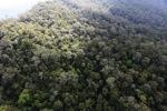 Borneo rainforest -- sabah_0856