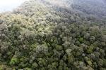 Borneo rainforest -- sabah_0857