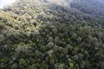 Borneo rainforest -- sabah_0860