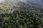Borneo rainforest -- sabah_0862