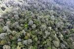 Borneo rainforest -- sabah_0863
