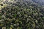 Borneo rainforest -- sabah_0864