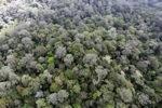 Borneo rainforest -- sabah_0865