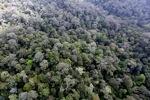 Borneo rainforest -- sabah_0866