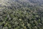 Borneo rainforest -- sabah_0868