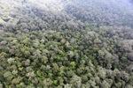 Borneo rainforest -- sabah_0873
