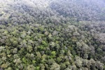 Borneo rainforest -- sabah_0875