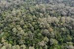 Borneo rainforest -- sabah_0877