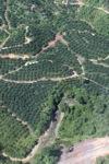 Oil palm plantation -- sabah_0878