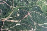 Oil palm plantation -- sabah_0882
