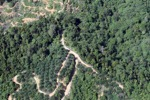 Oil palm plantation -- sabah_0883