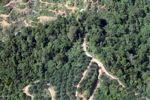 Oil palm plantation -- sabah_0884