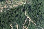 Oil palm plantation -- sabah_0886