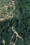 Oil palm plantation -- sabah_0887
