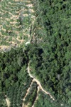 Oil palm plantation -- sabah_0888