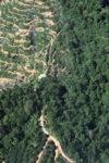 Oil palm plantation -- sabah_0889