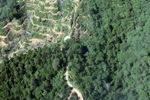 Oil palm plantation -- sabah_0890