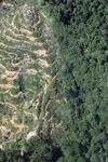 Oil palm plantation -- sabah_0891