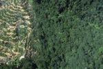 Oil palm plantation -- sabah_0892