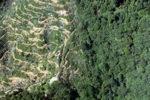 Oil palm plantation -- sabah_0893