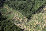Oil palm plantation -- sabah_0894