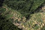 Oil palm plantation -- sabah_0895