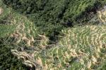 Oil palm plantation -- sabah_0896