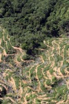 Oil palm plantation -- sabah_0897