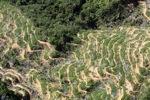 Oil palm plantation -- sabah_0898