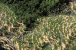Oil palm plantation -- sabah_0899