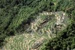 Oil palm plantation -- sabah_0901