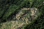 Oil palm plantation -- sabah_0902