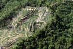 Oil palm plantation -- sabah_0903