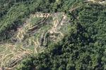 Oil palm plantation -- sabah_0904