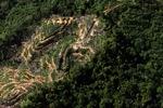 Oil palm plantation -- sabah_0905