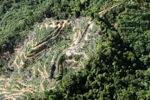 Oil palm plantation -- sabah_0906