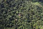 Borneo rainforest -- sabah_0907
