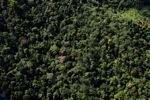 Borneo rainforest -- sabah_0908